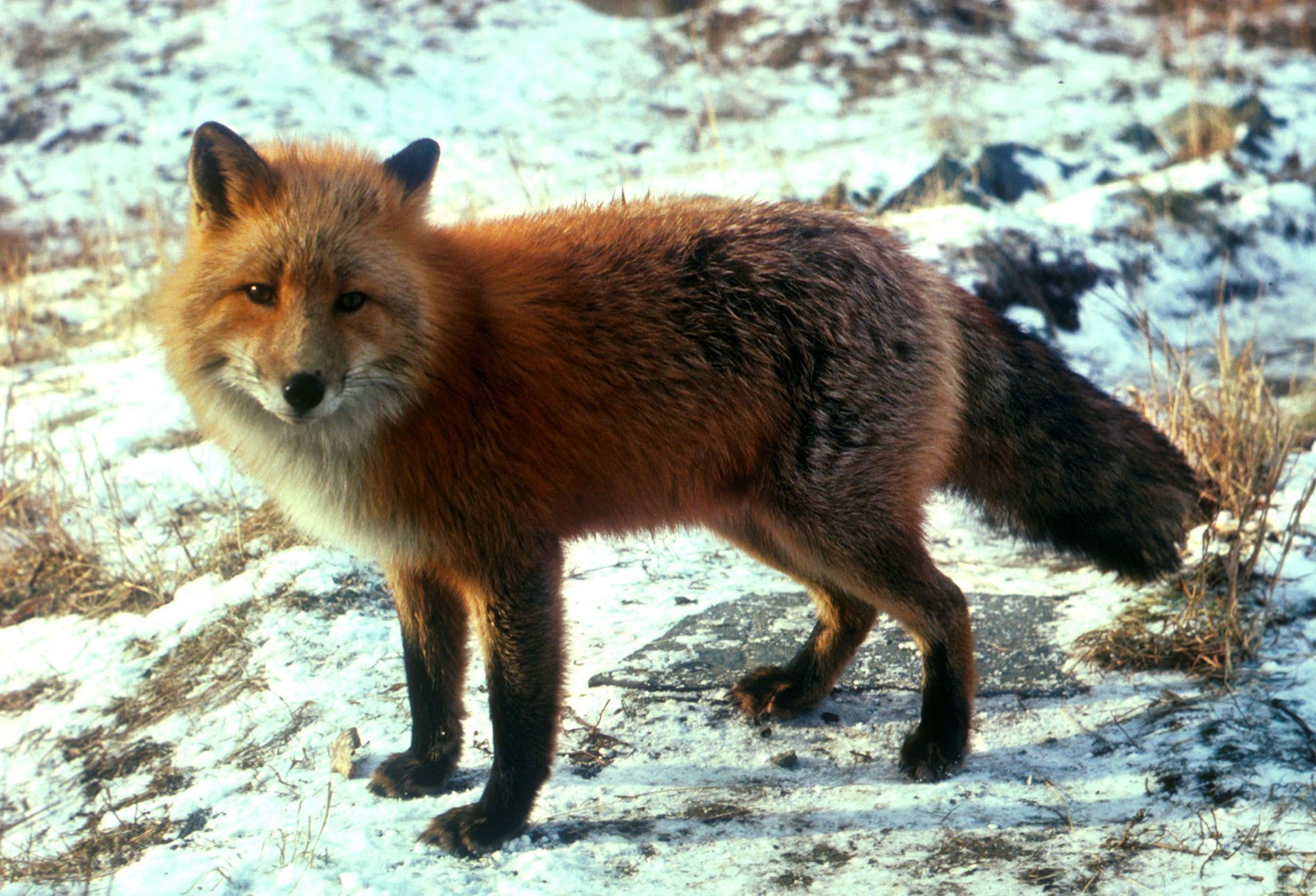 rainforest animals Coniferous Forest Animals Nature Pinterest Rainforest animals and Animal
