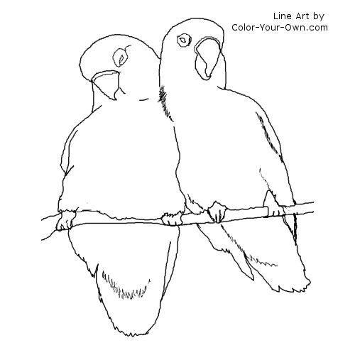 birds lineart  zeichnen aquarell bilder