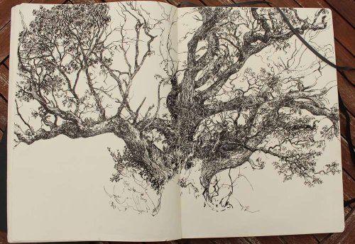 Carnet d 39 arbres suite jardin imaginaire dessin - Croquis arbre ...