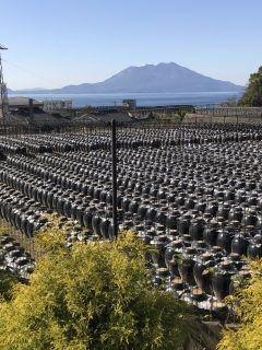 鹿児島の福山町です黒酢で有名なところで手前は黒酢製造中のツボです 桜島も綺麗ですね tags[鹿児島県]