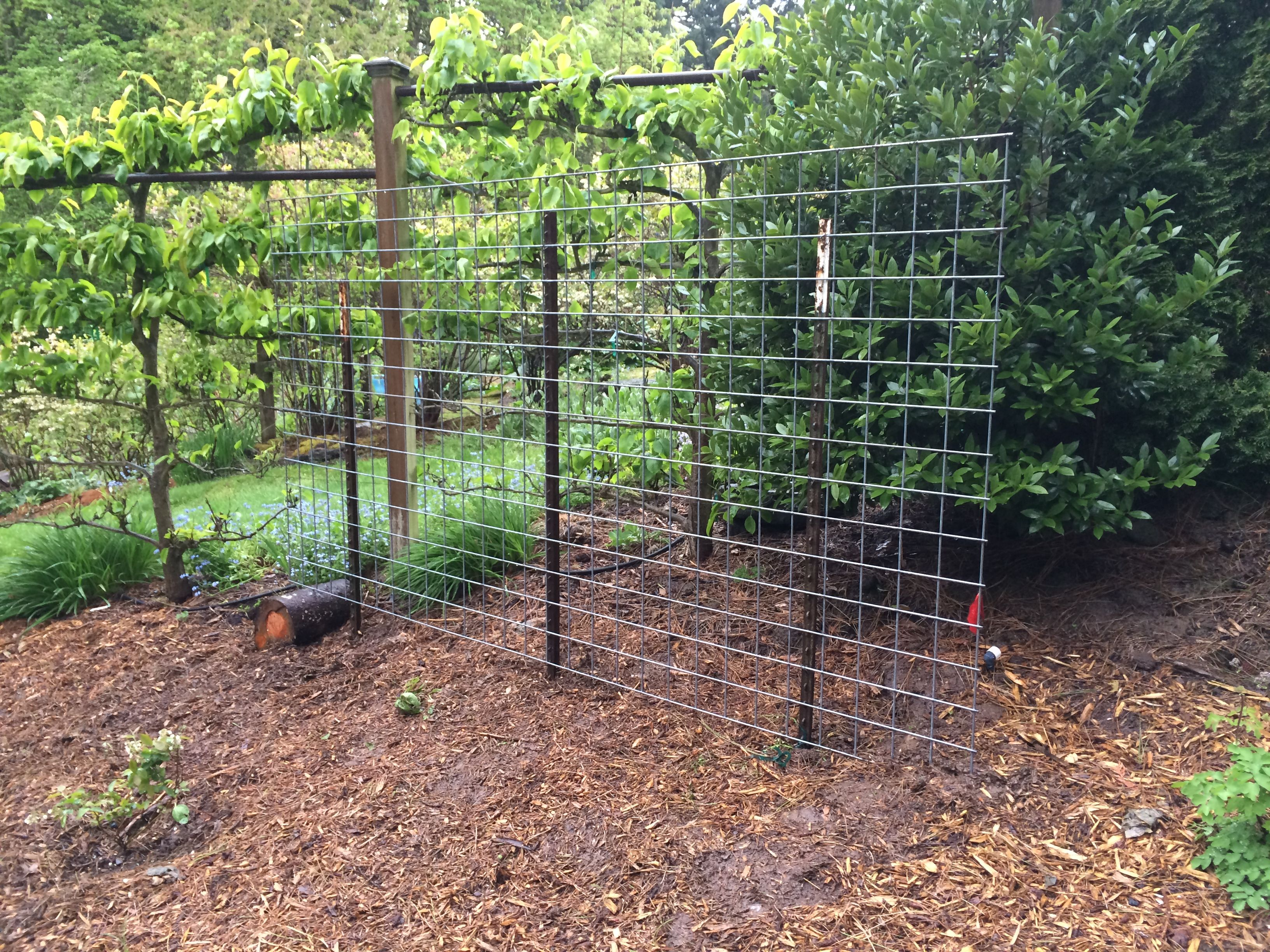 cattle panel trellis garden and permaculture garden. Black Bedroom Furniture Sets. Home Design Ideas
