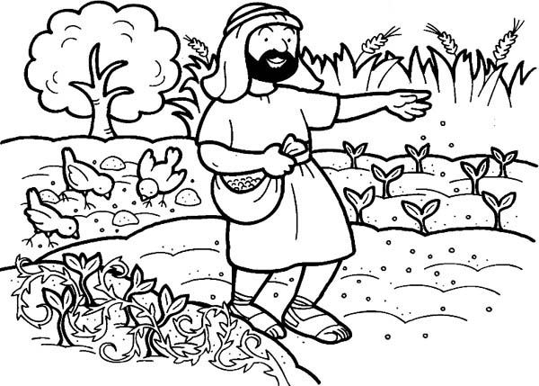 Seed That Falling Into Good Soil In Parable Of The Sower Coloring