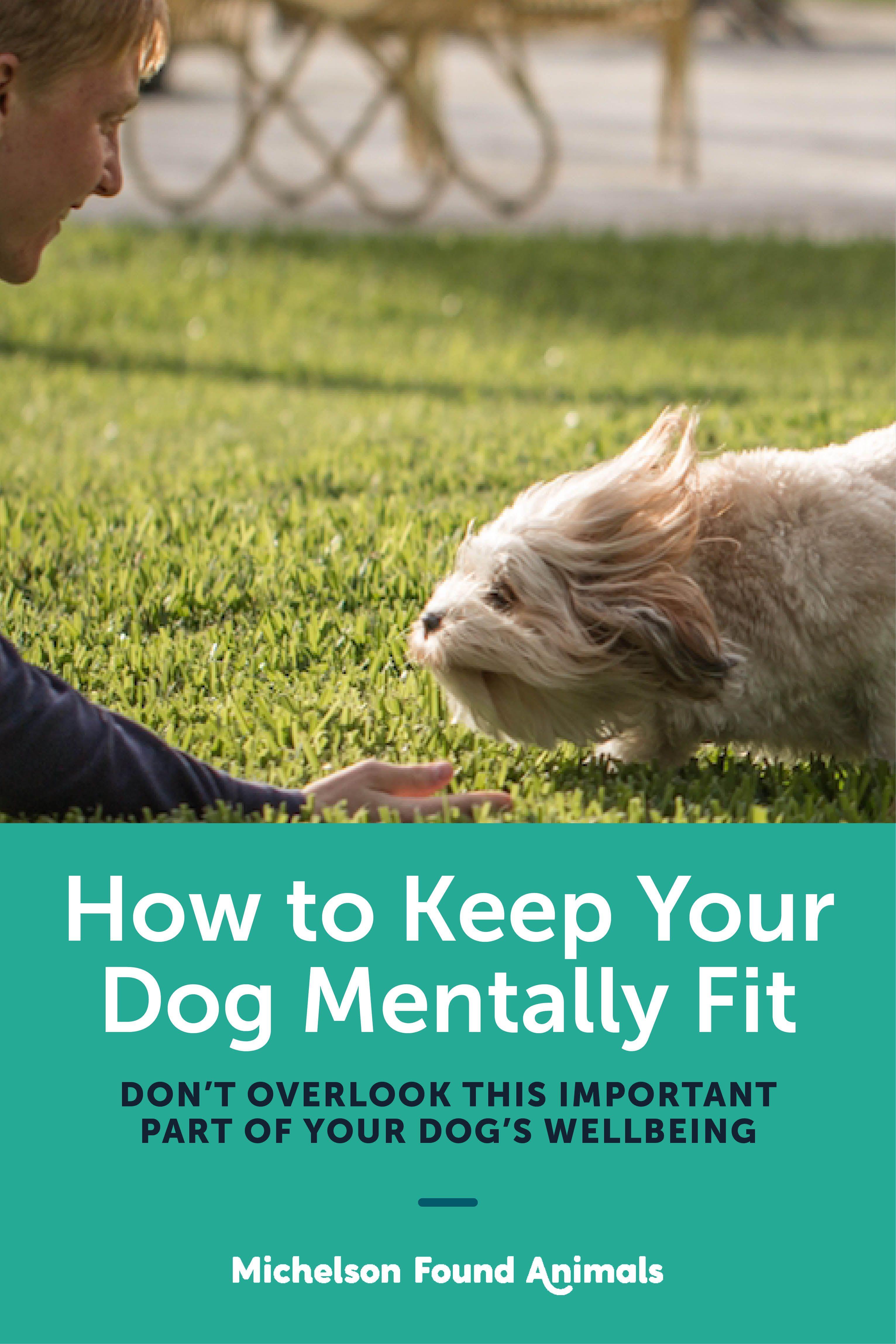 Puppy Temperament Test Service Dog References