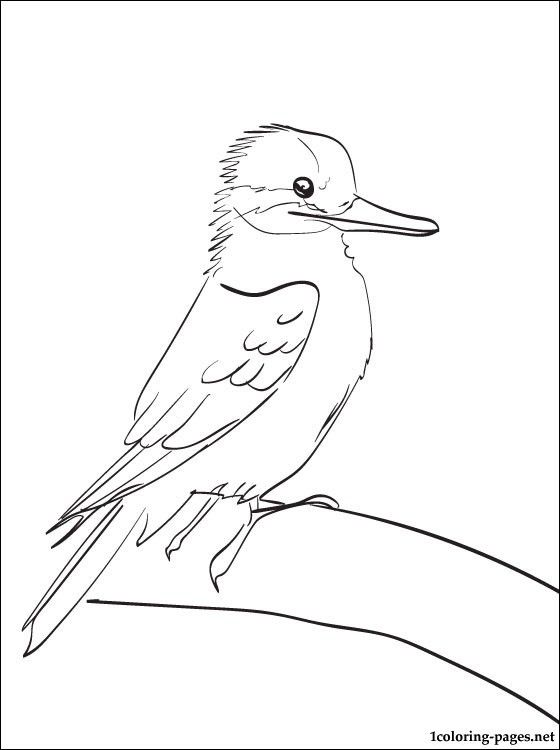 Kookaburra Printable And Coloring Page Coloring Pages Obrazky