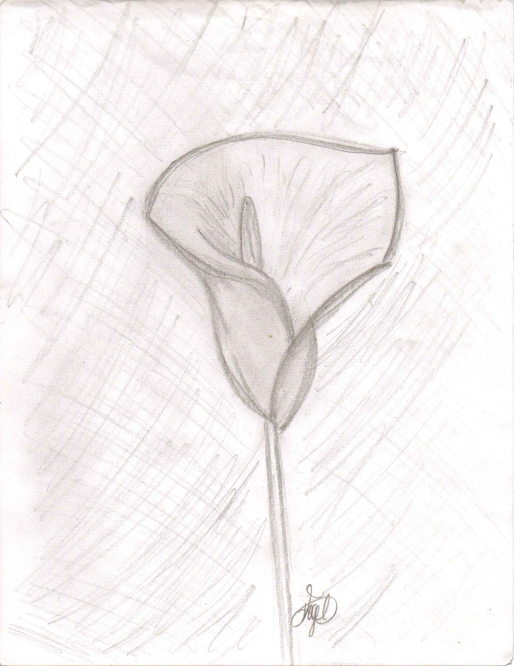sketch art flowers images galleries