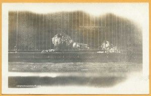 20's Vintage snapshot of lions in a cage. Photo taken at the Lincoln Park Zoo, Chicago in 1929. - For Sale. - #foundphotos #vintagephotos #vintagesnapshots #oldphotos #snapshots