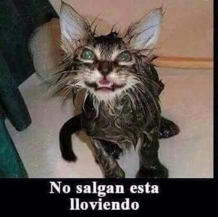 No Salgan Funny Spanish Memes Funny Baby Memes Funny Vines