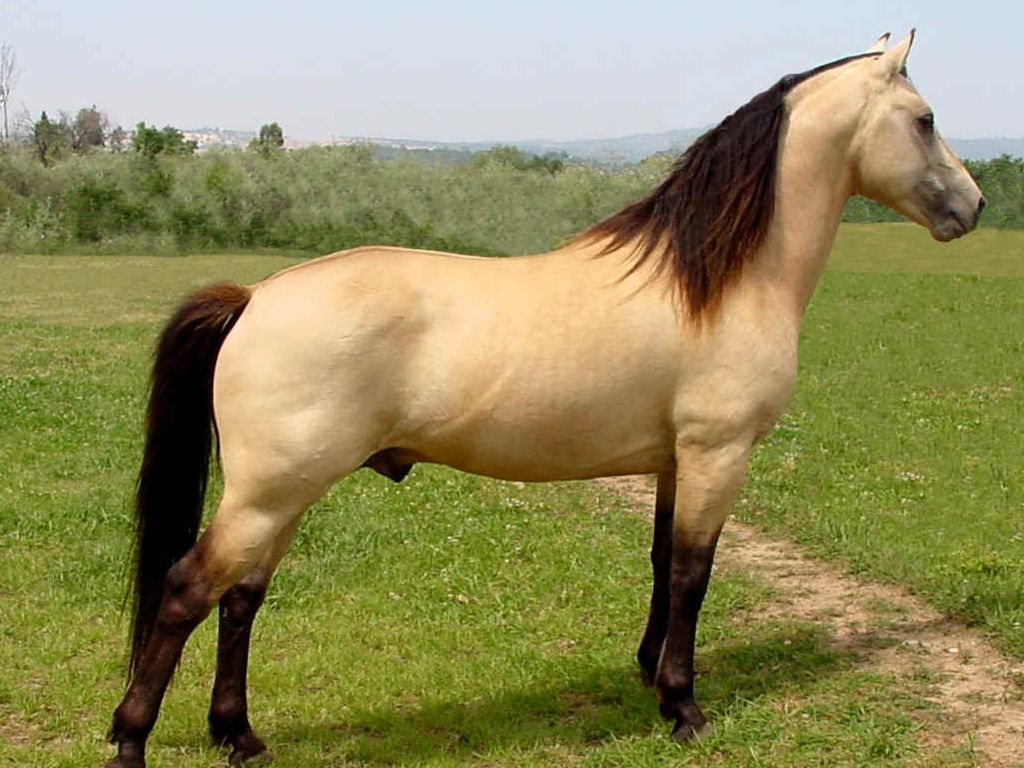 Must see Wallpaper Horse Deviantart - 77ecf2cc7894f3dcf8508c09587dde08  Image_312933.jpg