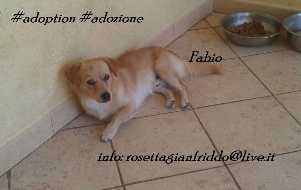 Fabio simil volpino 1 anno - http://hormiga.it/fabio-simil-volpino-1-anno/