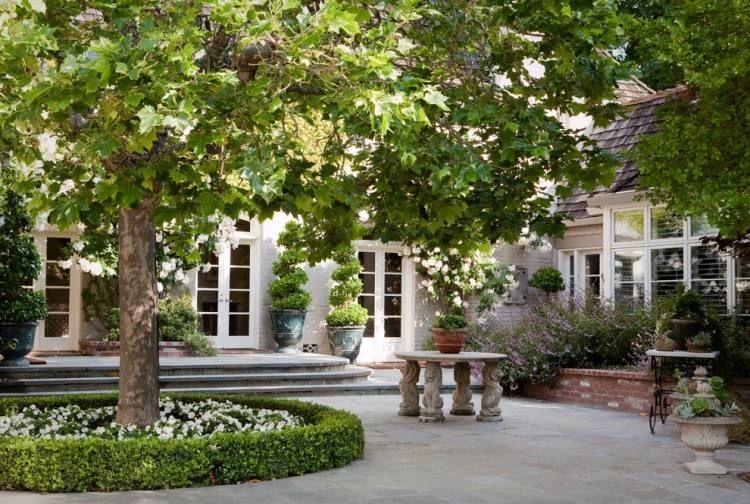 niedrige Buchsbaumhecke um den Baum und weiße Blumen | Garden ...