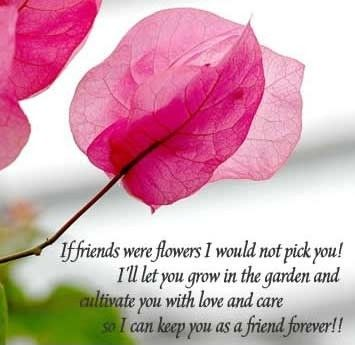 Flowers Friends Quotes Google Search Quotes Pinterest