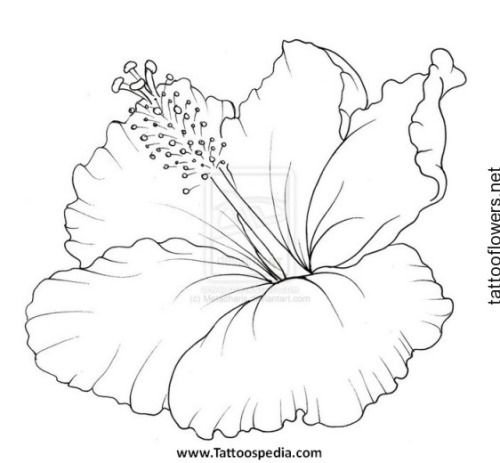 Hibiscus Flower Tattoo Stencil Art Pinterest Hibiscus - copy free coloring pages of hibiscus flowers
