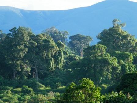 Cap 8: el tribu de los liricos viven en los Bosques Centrales. Los ictios hacen chistes de los liricos. Los chicos estaban visitando al tribu de los liricos.