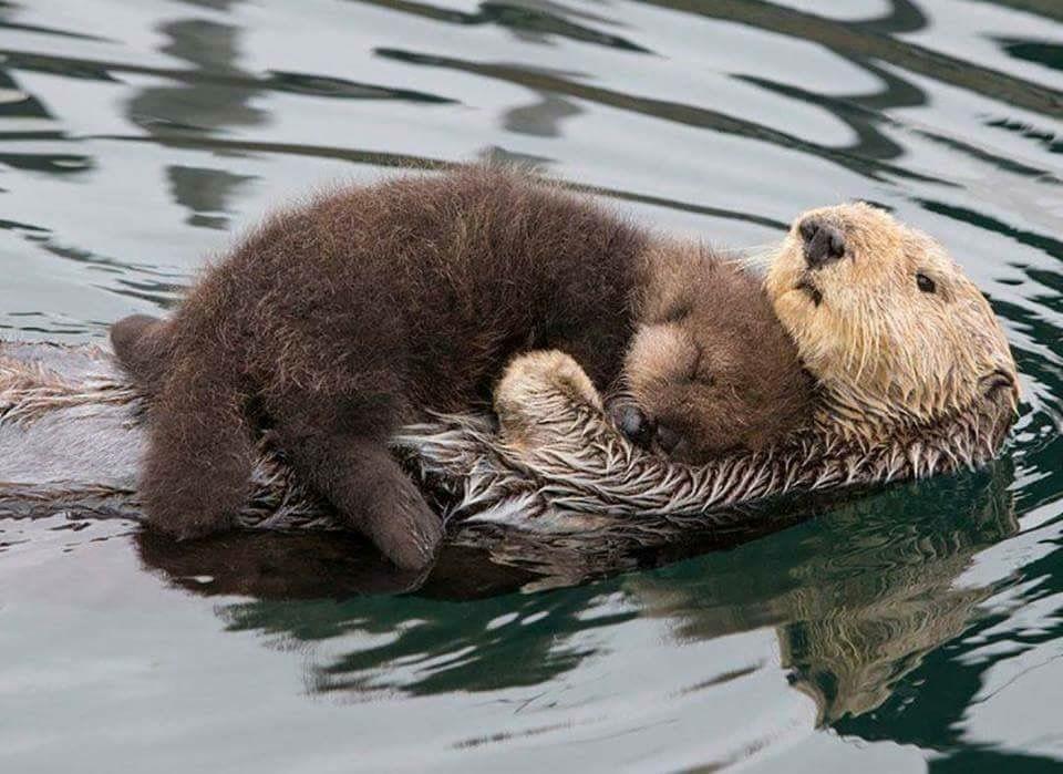 Baby Otter Sleeping Cute Animal Photos Cute Animals Cute Baby Animals