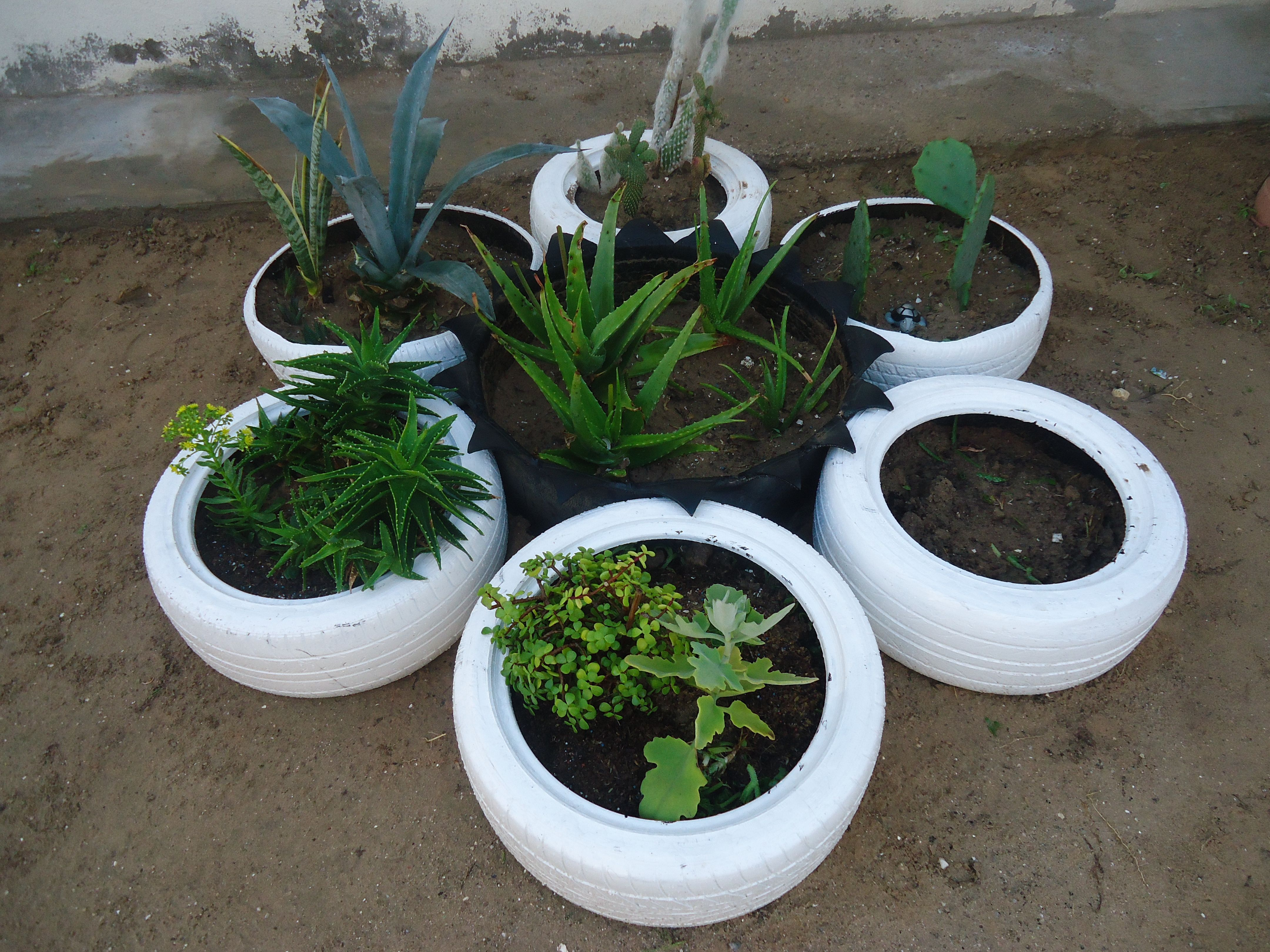 Una tarde de domingo diferente, con llantas y plantas endémicas, vivimos en pleno desierto, hay que cuidar el agua.