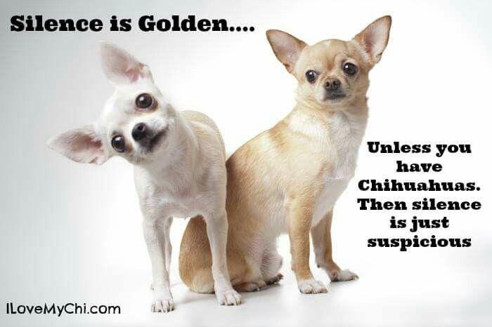 Silence Chihuahua Funny Cute Chihuahua Chihuahua