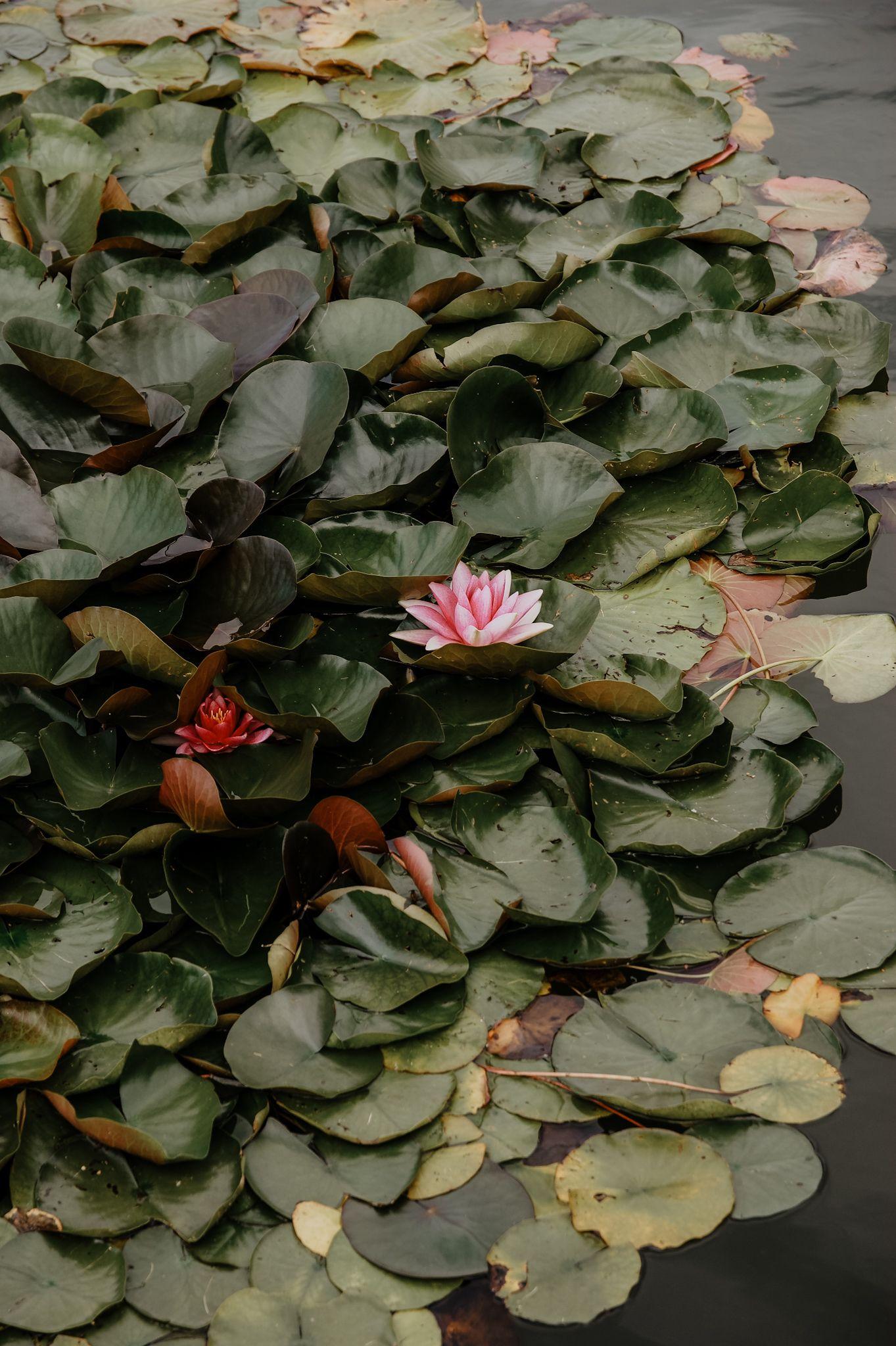 Pin Auf Nature Photography