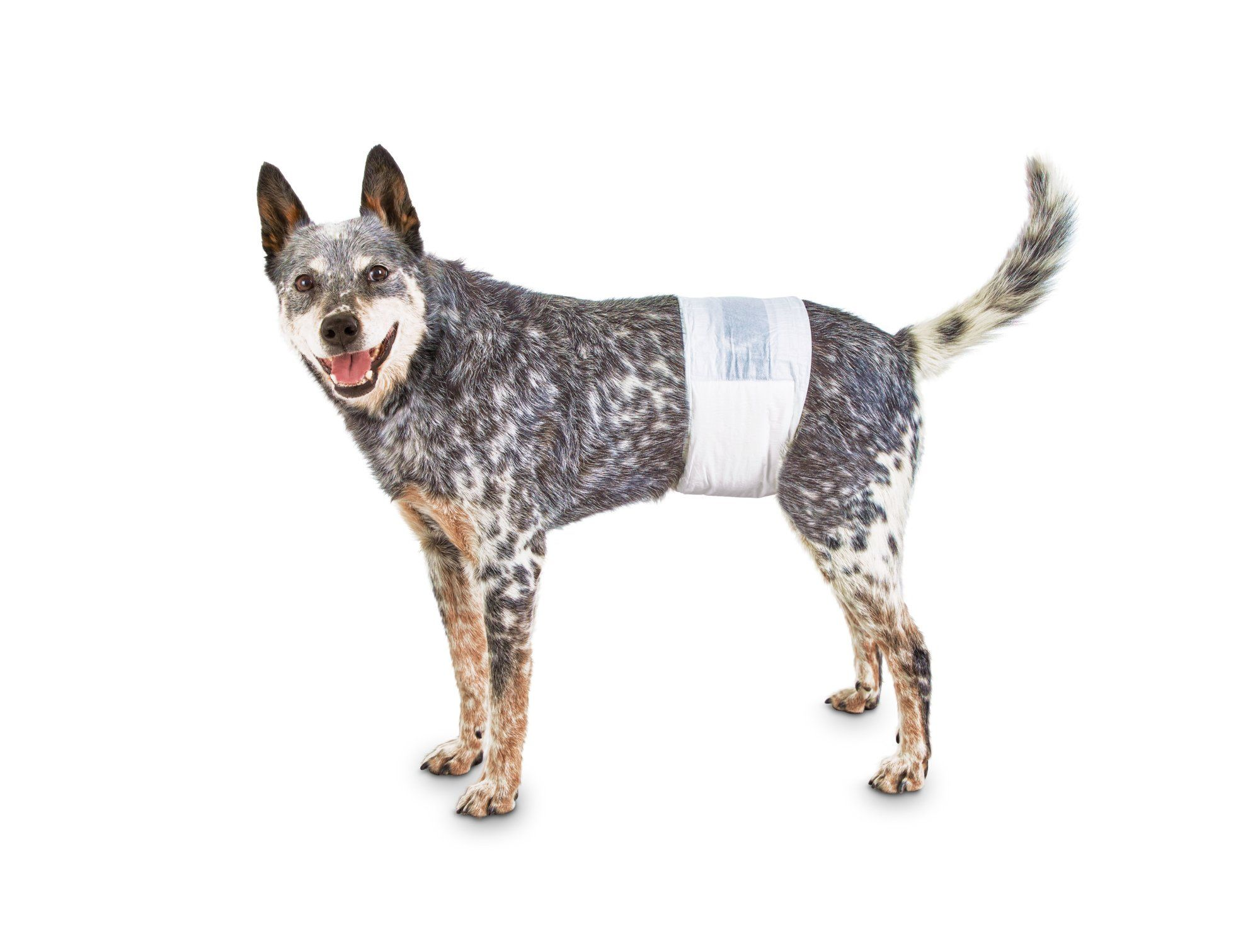 So Phresh Comfort Dry Disposable Male Dog Wraps, Count of