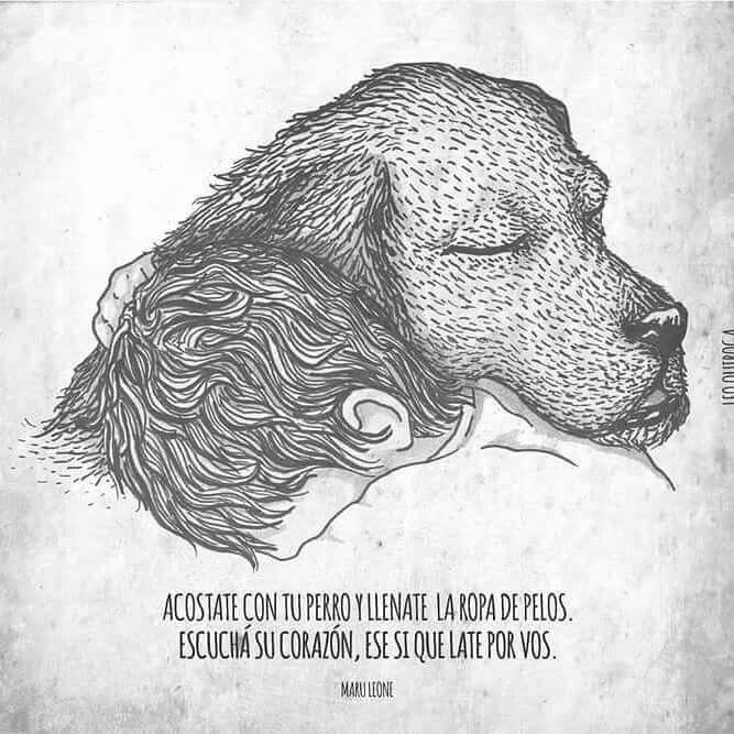 Hay Mi Bobby Amantes De Perros Perros Frases Y Mamá De