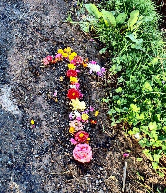 Las flores también sirven para señalar la ruta del #CaminodeSantiago