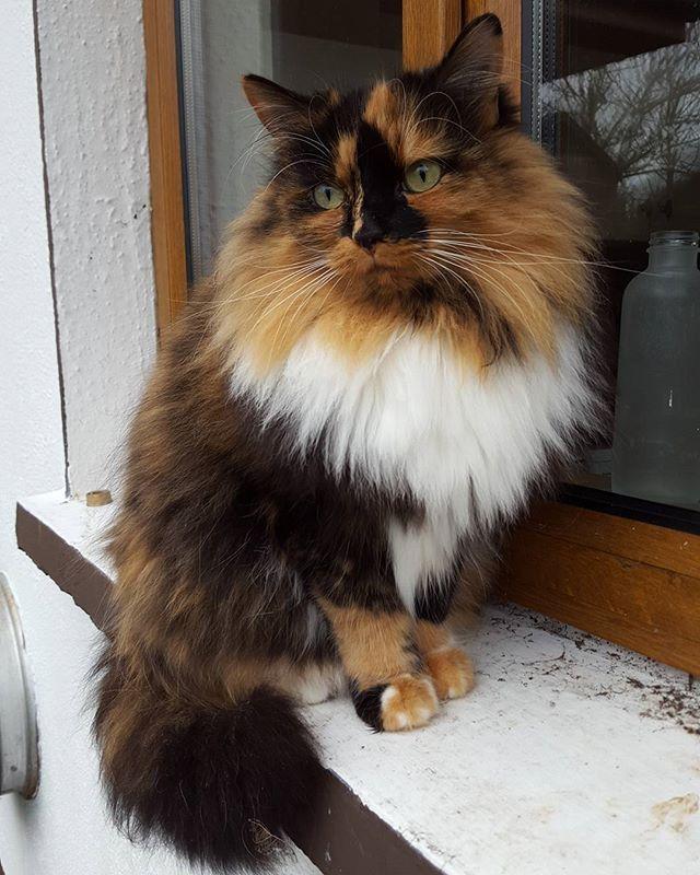 Cybergata Cute Cats And Dogs Cute Cats Pretty Cats