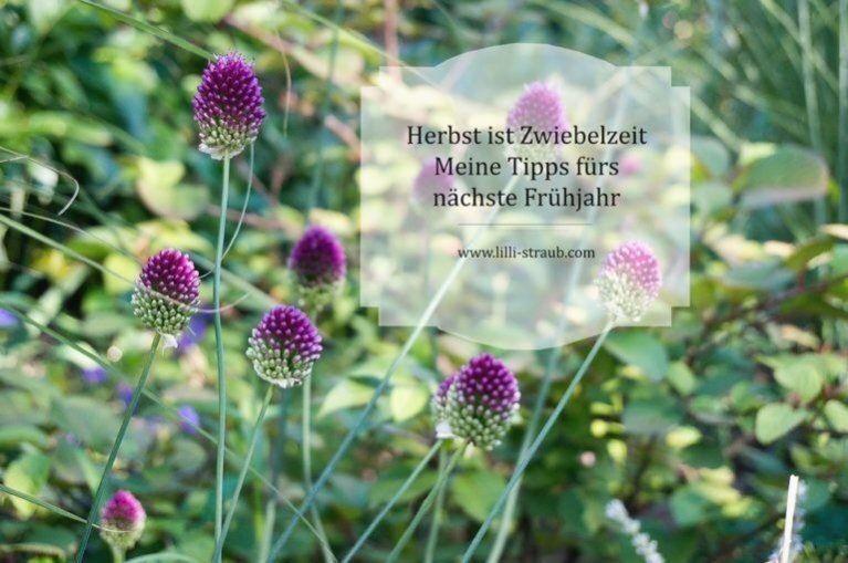 Zwiebelpflanzen Lilli Straub Den Traumgarten Planen In 2020 Pflanzen Garten Fruhlingsgarten