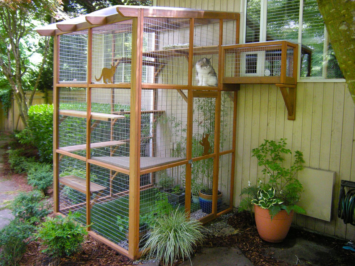 Incredible Catios by Catio Spaces in Seattle (With images