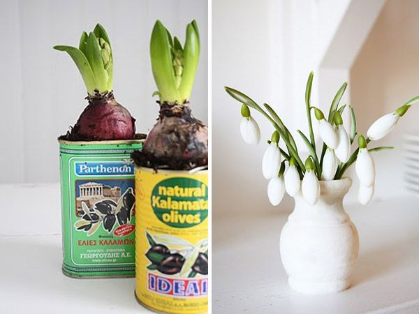 Grow Bulbs!