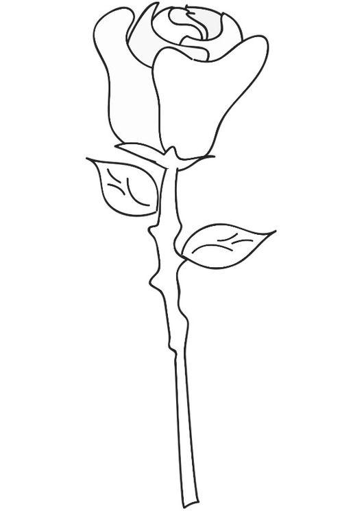 Kleurplaten Roos.Kleurplaat Roos Tekeningen Bloemen Kleurplaten Bloem