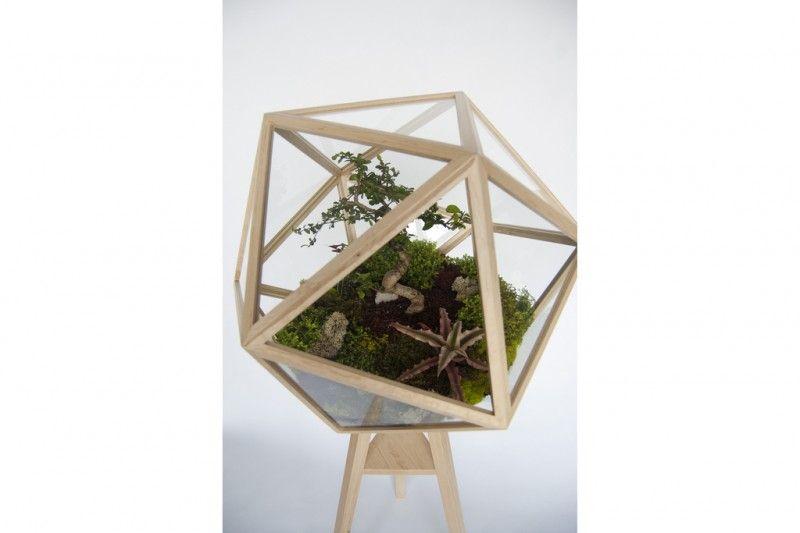 Un terrario icosaedro de Fort Standard - Monkeyzen