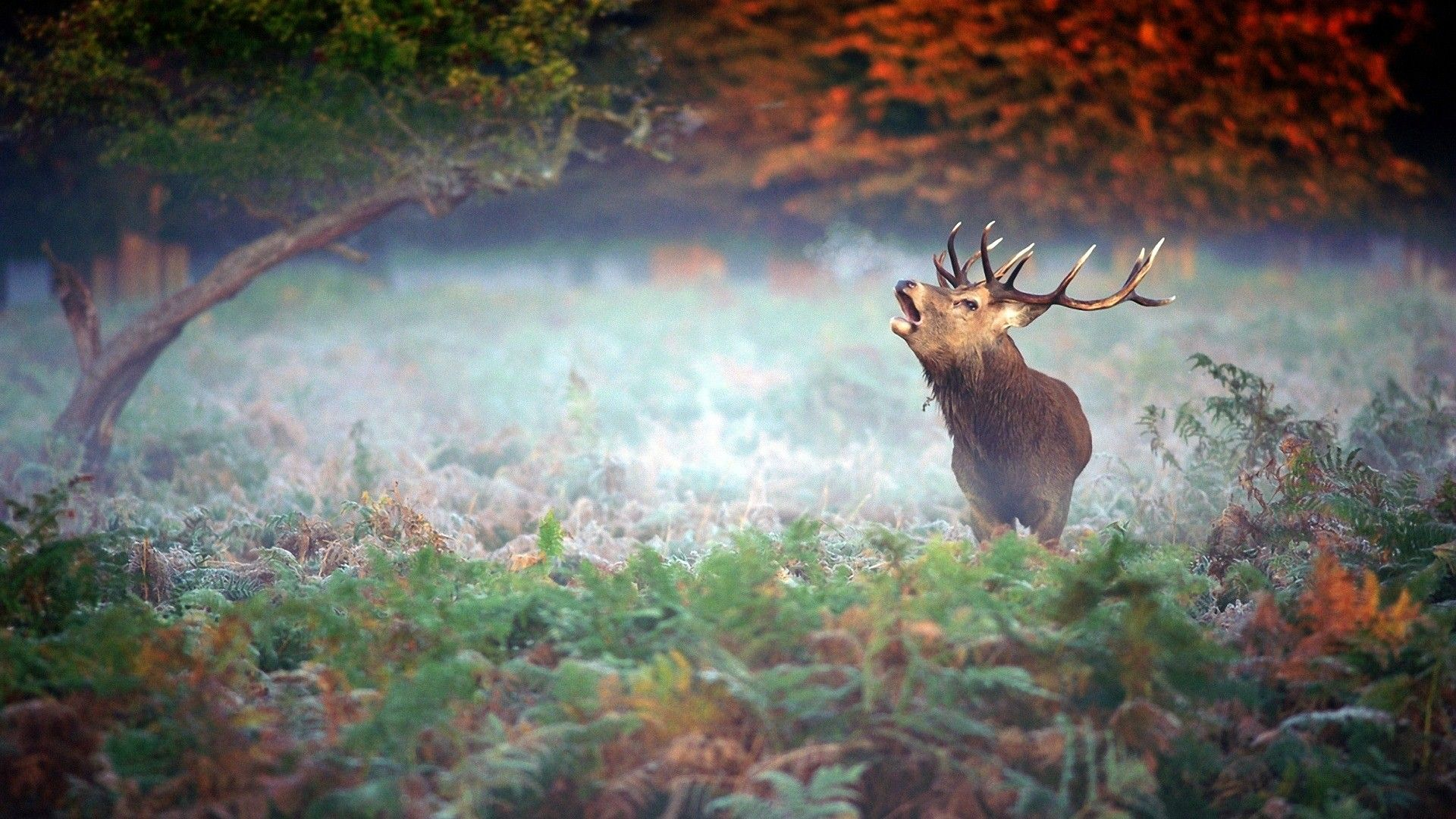 Deer Forest Nature Fog Hd Wallpaper