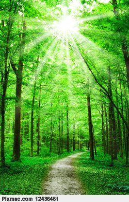Happy sunshine forest