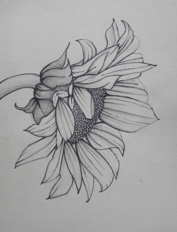 Pencil art work sunflower mixed media original drawing print drawn in 2013 i really wanted to try a little mixed media this is done with mixed
