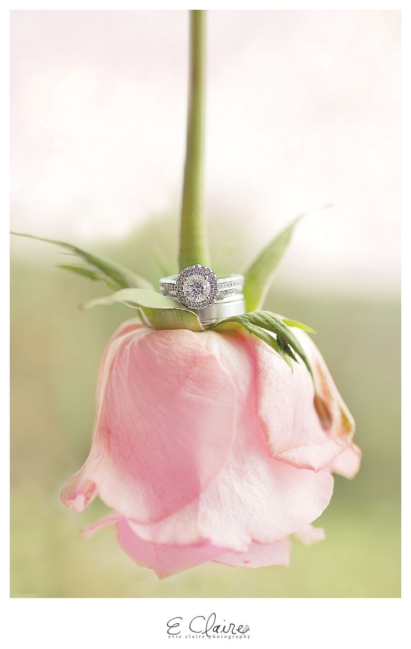 Weddings: It\'s all in the details | Pinterest | Rose wedding rings ...
