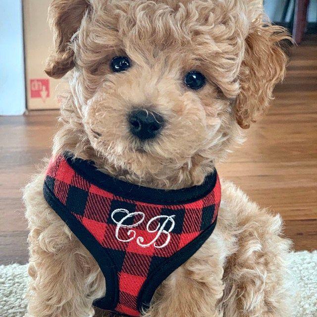 Personalized Mini Red And Black Buffalo Plaid Soft Dog Pet Harness