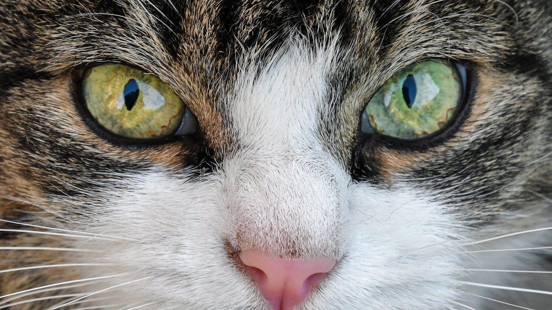 Cantidad De Comida Diaria Para Gatos In 2020 Fun Facts About Animals Funny Cute Cats Cute Cat Gif