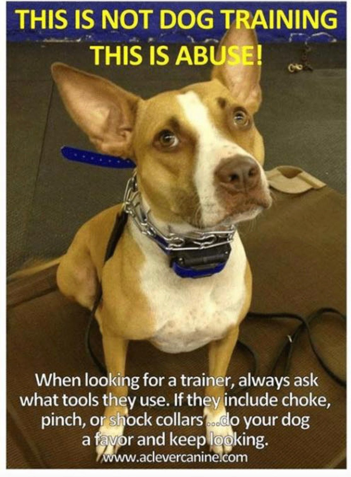 Pin By Kathrine Breeden On Dog Behavior Training Information