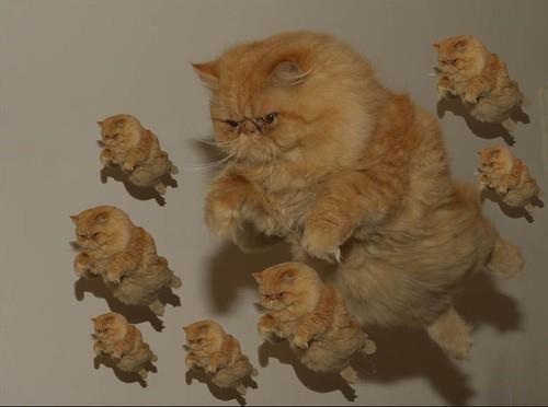 el gato voladooooooorrr