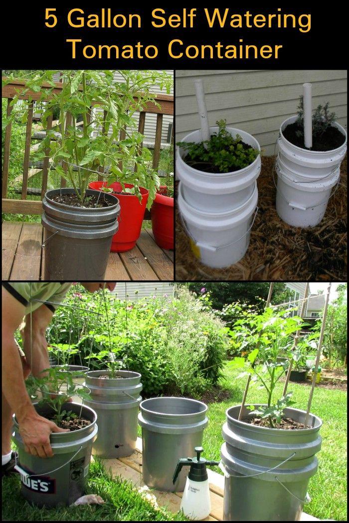 5 Gallon Self Watering Tomato Container DIY