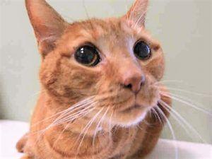 Tiger A1112762 Pets Cat Shelter Cat Love