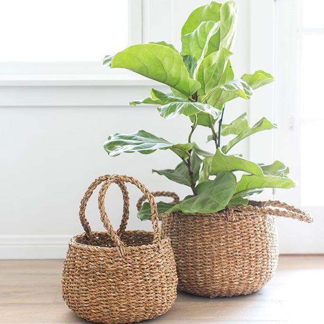 Baskets For Yours Plants Homesick Ikea Plants Farmhouse Decor Living Room Decor