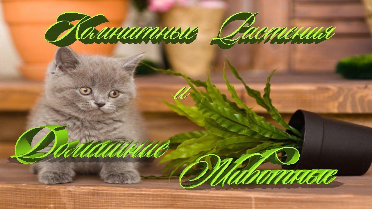 Комнатные растения и Домашние животные | Животные, Жизнь ...