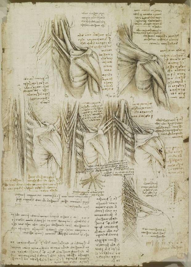 leonardo da vinci anatomy - Google Search | flesh robe | Pinterest ...