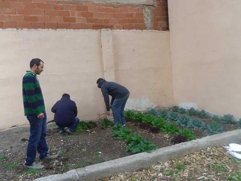 """El pasado mes de febrero, desde el Centro de Intervención de Baja Exigencia (CIBE) de Castellón, dispositivo de reducción de daños para drogodependientes de la Fundación Salud y Comunidad (FSC), pusimos en marcha el espacio """"Huerto Ecológico"""" con un grupo de usuarios/as del centro."""