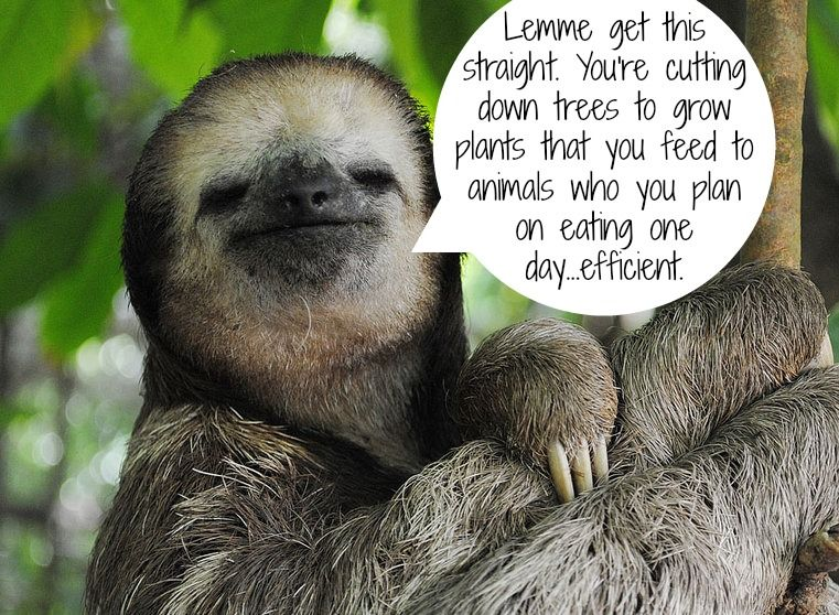 The Sloth's Have Spoken! Here's What They Have to Say