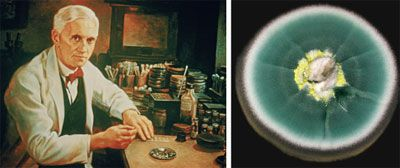 Serendipity Alexander Fleming Discovered The Antibiotic Properties