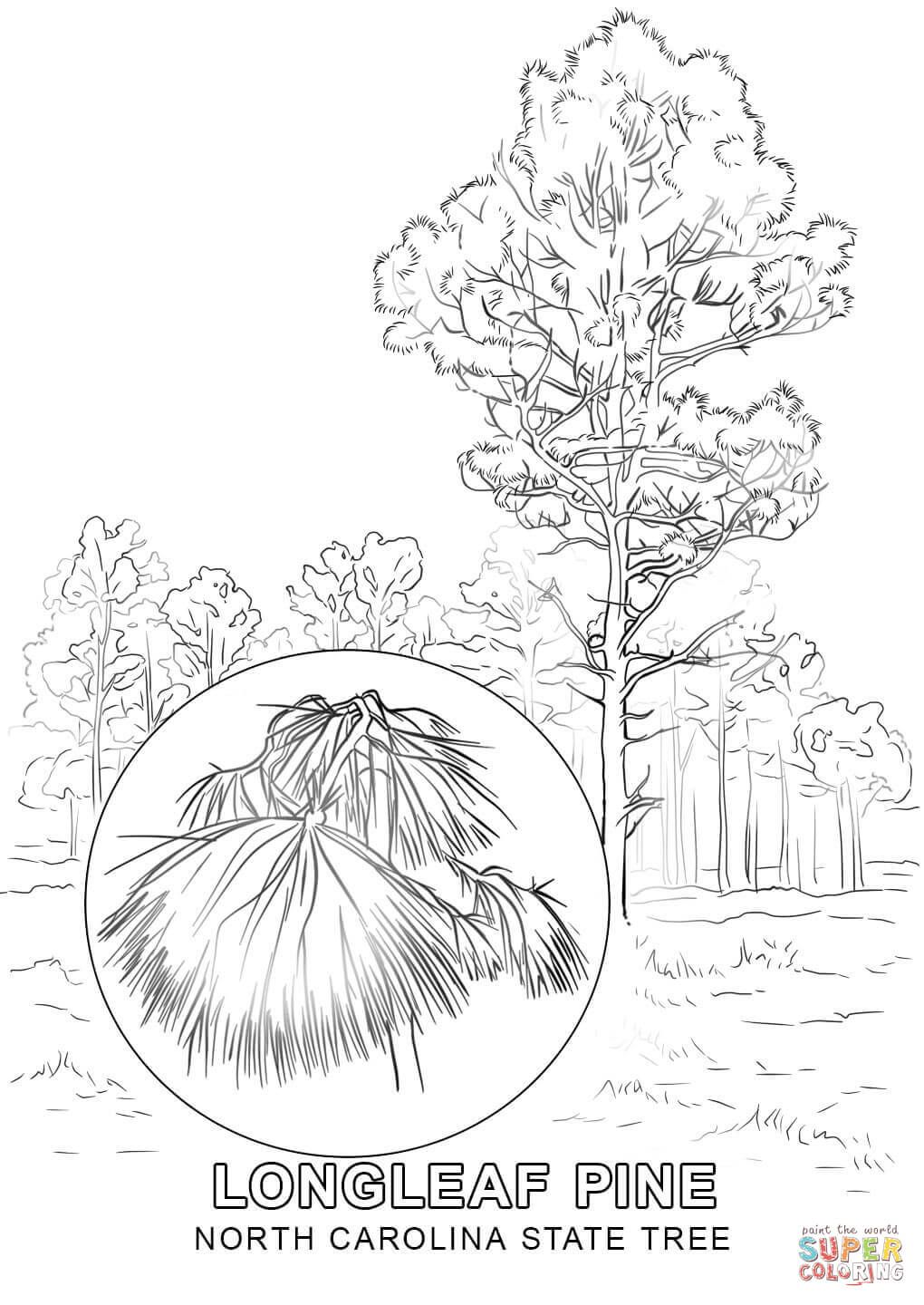 Click The North Carolina State Tree Coloring Pages To View