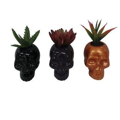Succulent Halloween Dark Wonder - Hyde and Eek! Boutique™  Target