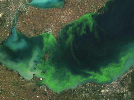 Lake Erie algae relief years away  www.detroitnews.com/story/news/environment/2015/03/29/lake-erie-algae-relief-years-away/70642990/