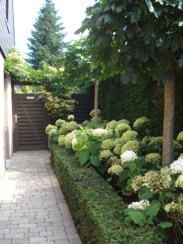 hydrangeas and shrub border
